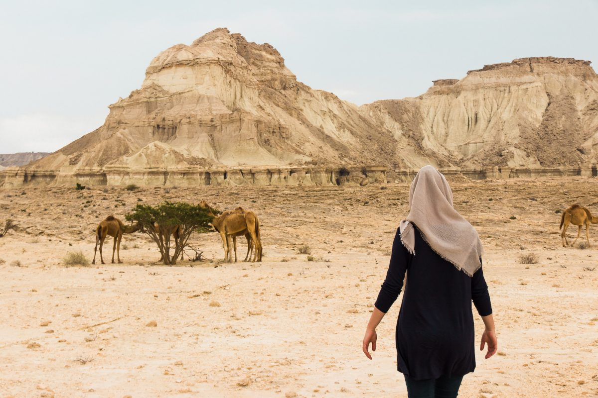 Nature with camels on Qeshm Island Iran