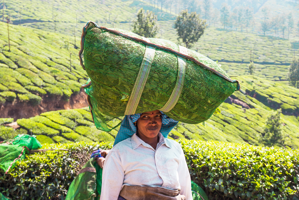 Trekking in Munnar's Tea Fields - Friendly Lady Smiling