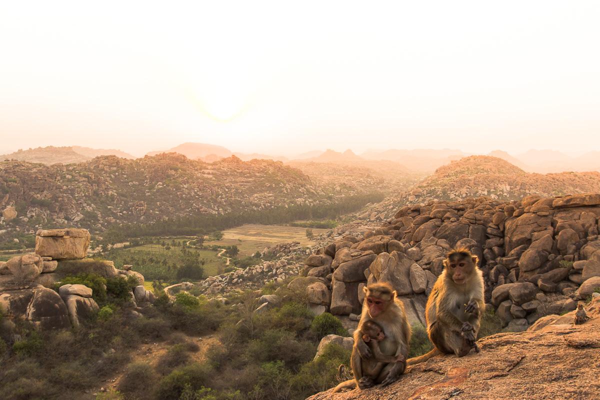 Things to do in Hampi: Monkeys at Hanuman Temple