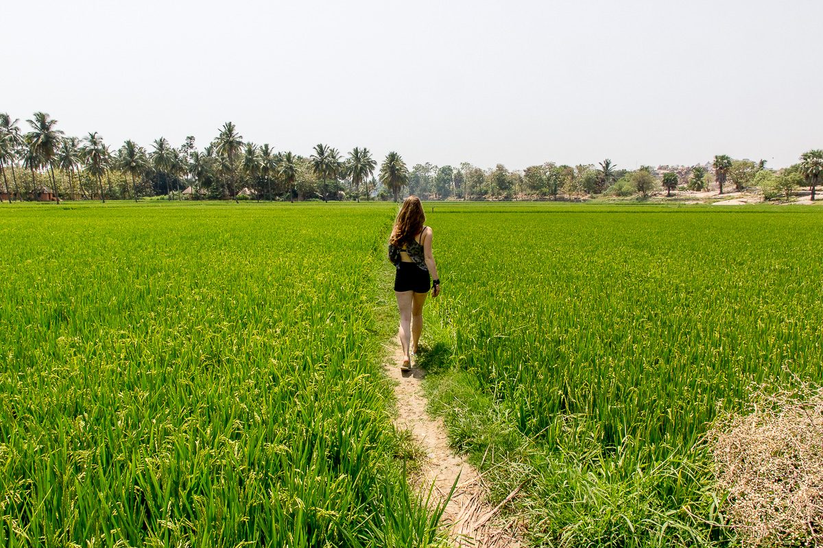 Things to do in Hampi: Explore the Rice Fields