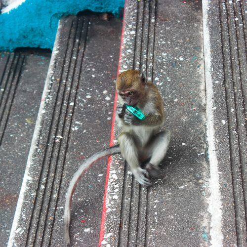 monkey at batu caves kuala lumpur