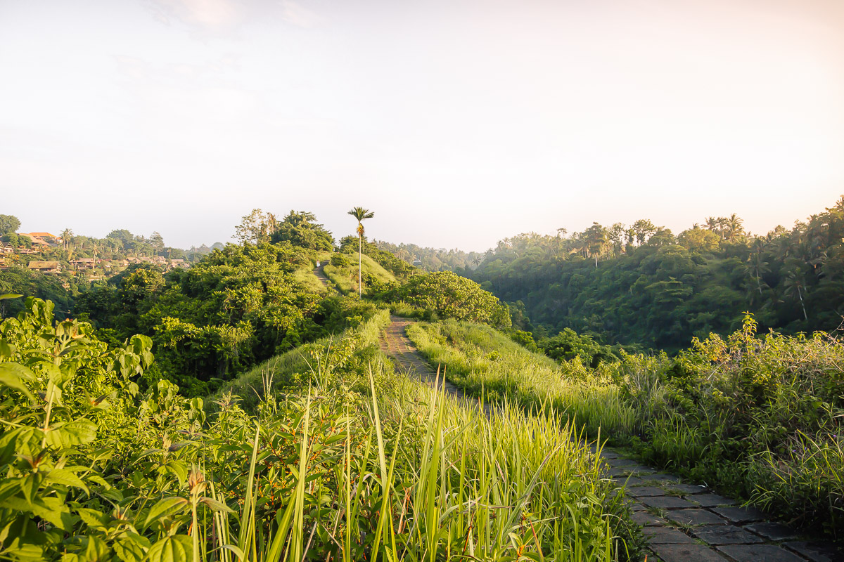 sunrise at the campuhan ridge walk in ubud bali