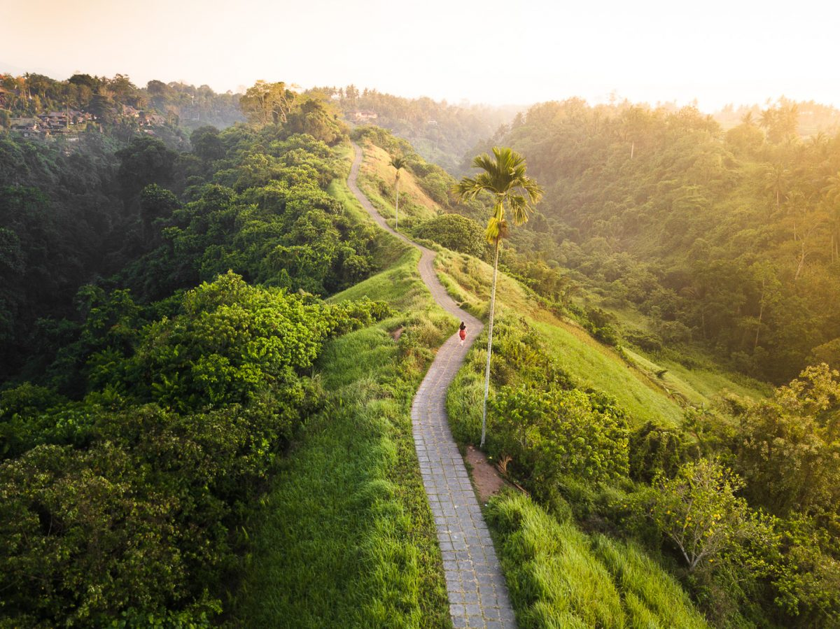 drone view over the campuhan ridge walk in ubud