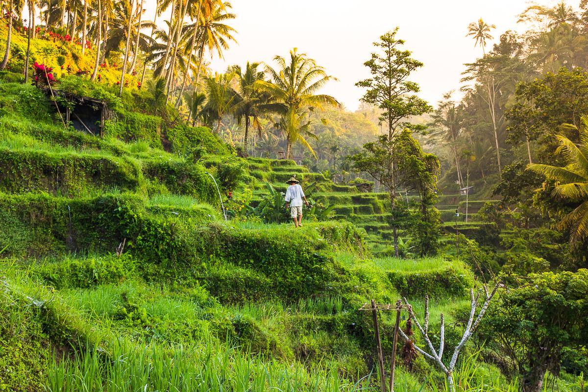 tegalalang rice terraces in ubud bali
