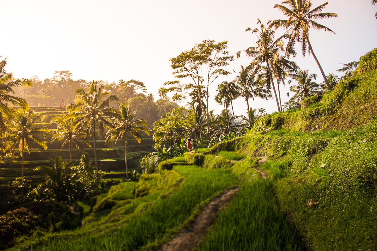 tegalalang rice terraces bali for first timers