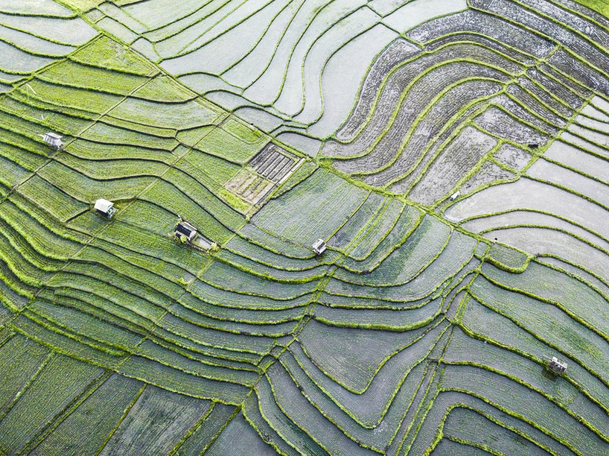 drone view over rice fields in canggu bali