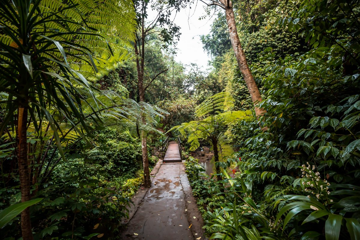path leading to the tibumana waterfall in ubud bali