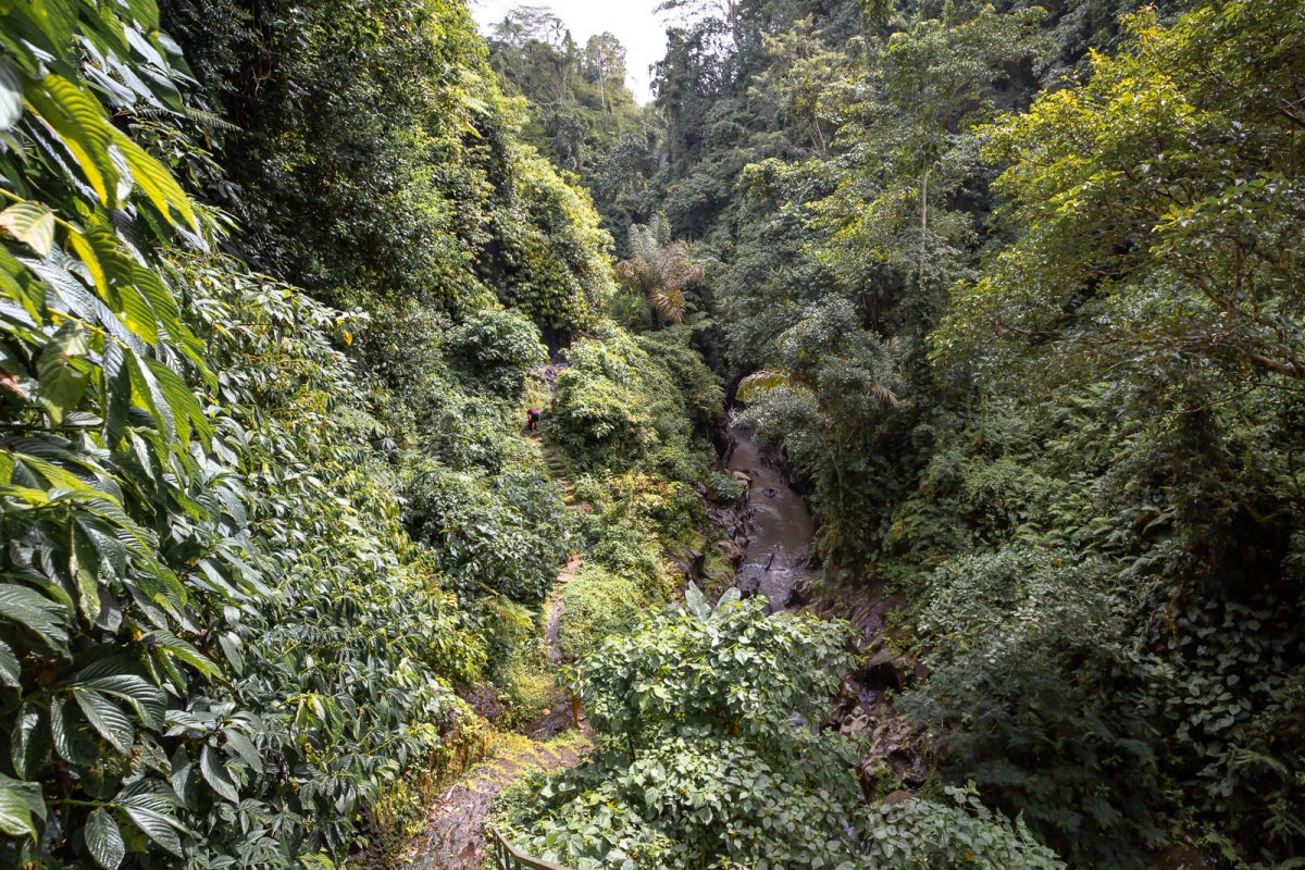 view from the stairs over the canyon of the dusung kuning waterfall in bali