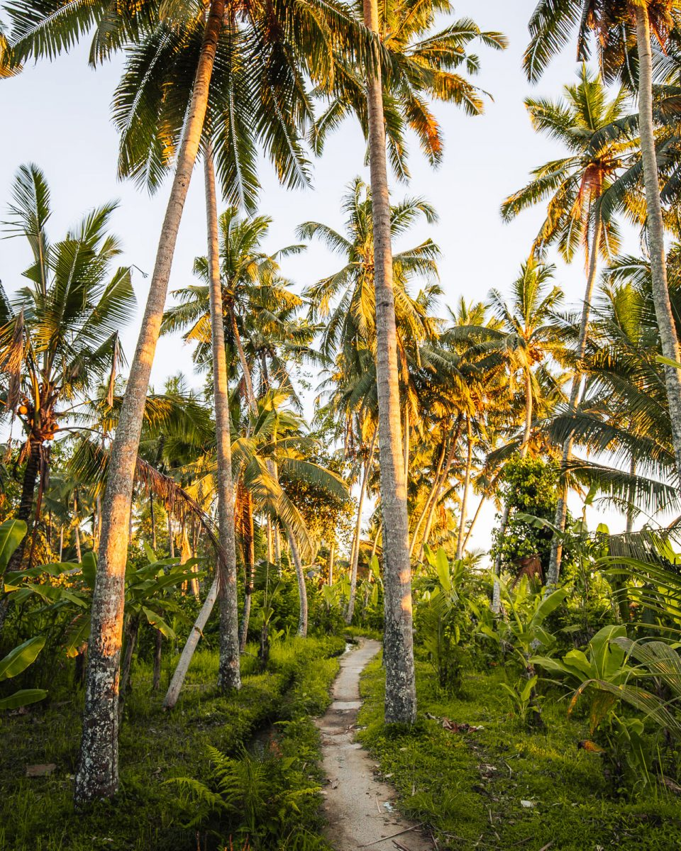 path with palm trees in ubud