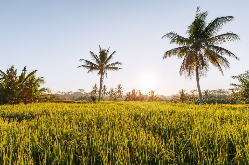 A Complete Guide to the Most Beautiful Rice Fields in Ubud