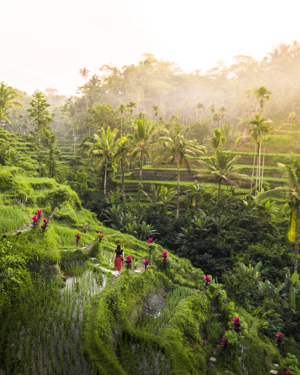 woman walking through the tegalalang rice terrace in ubud