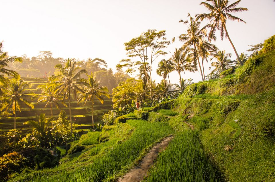 The Most Beautiful Rice Fields in Bali - A Complete Guide