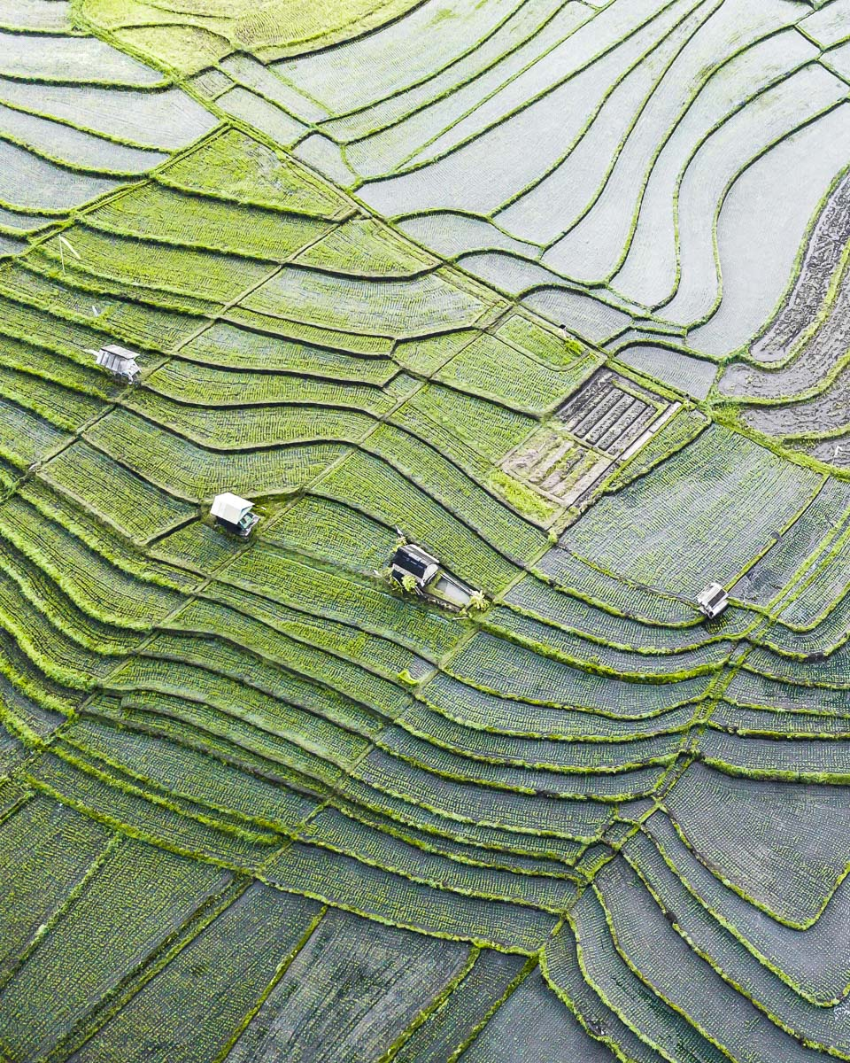 drone shot of the rice fields in Canggu bali