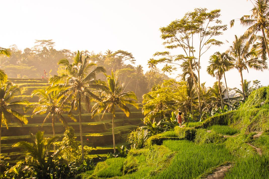 woman standing in the Tegalalang Rice Terrace at sunrise in Ubud Bali